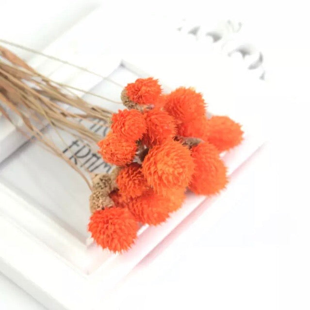 Natural Dried Gomphrena Globosa Flower Stem Bunch - Orange