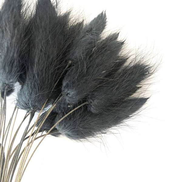 Natural Dried Rabbit Tail Grass Flower Stem Bunch - Black