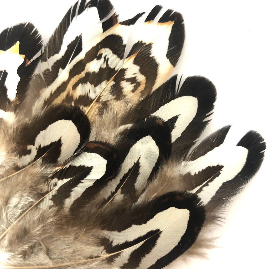Natural Black White Reeves Pheasant Feather Plumage x 10 pcs