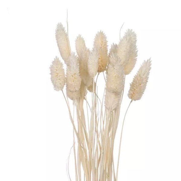 Natural Dried Phalaris Grass Flower Stem Bunch - White