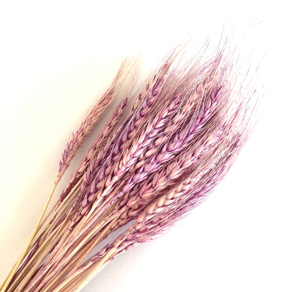 Natural Dry Wheat Grass Stalk Stems x 100 pcs ((BULK PACK)) - Lilac