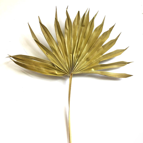 Natural Dry Sun Palm Fan Frond Leaf Stem 40cm - Style 6