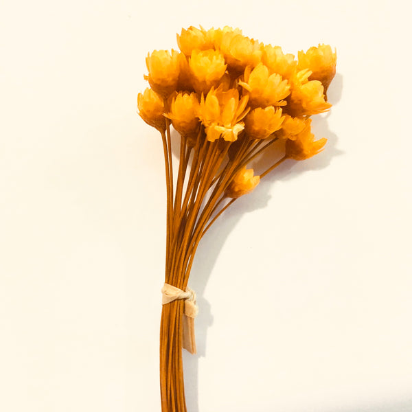 Natural Dry Mini Daisy Flower Stems - Orange