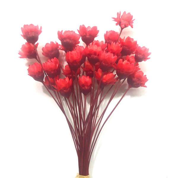 Natural Dry Mini Daisy Flower Stems - Red