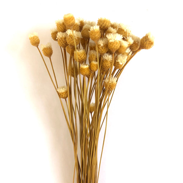 Natural Dry Mini Happy Flower Stems - White
