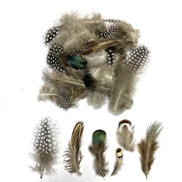 Natural Pheasant Guinea Rooster Peacock Feather Plumage Mix x 50pcs (Style 2)