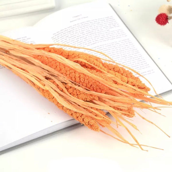 Natural Dried Tapestry Millet Grass Grain Flower Stem Bunch - Orange