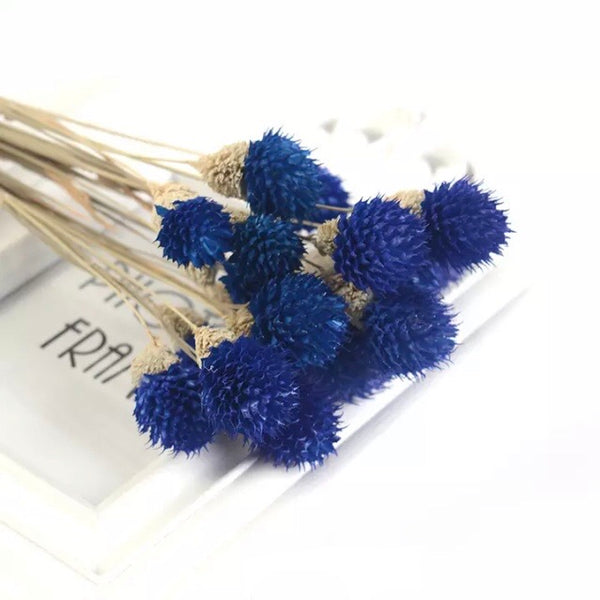 Natural Dried Gomphrena Globosa Flower Stem Bunch - Royal Blue