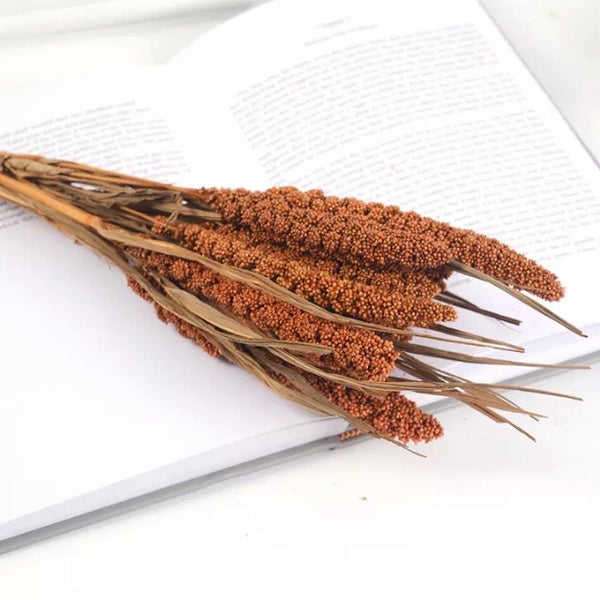 Natural Dried Tapestry Millet Grass Grain Flower Stem Bunch - Rust Brown