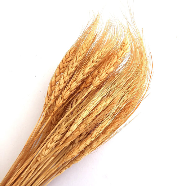 Natural Dry Wheat Grass Stalk Stems x 10 pcs - Orange