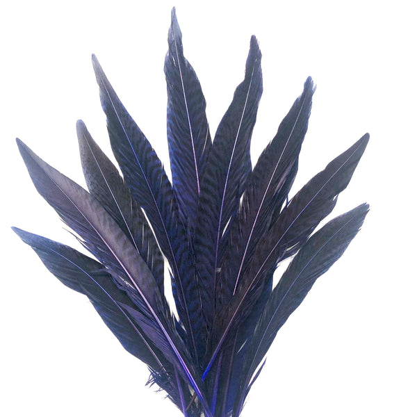 "6"" to 10"" Golden Pheasant Side Tail Feather x 10 pcs - Royal Blue"