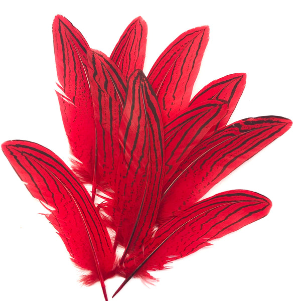 "Under 6"" Silver Pheasant Tail Feather x 10 pcs - Red"