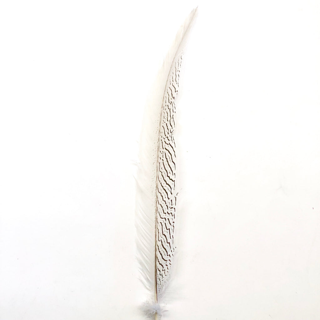 "10"" To 20"" Silver Pheasant Tail Feather - Natural ((SECONDS))"
