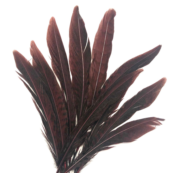 "Under 6"" Golden Pheasant Side Tail Feather x 10 pcs - Chocolate Brown"