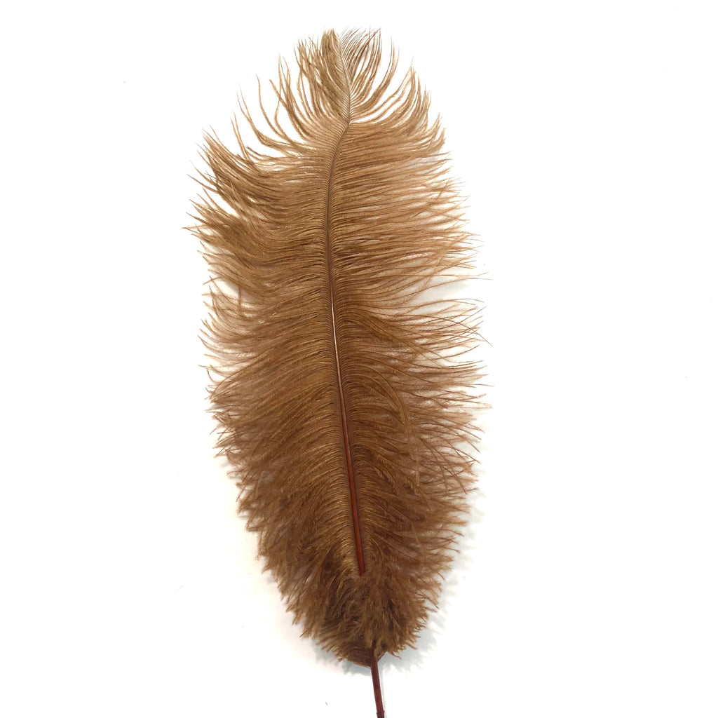 Ostrich Drab Feather 27-32cm - Rust Brown