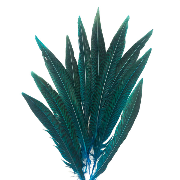"6"" to 10"" Golden Pheasant Side Tail Feather x 10 pcs - Turquoise"