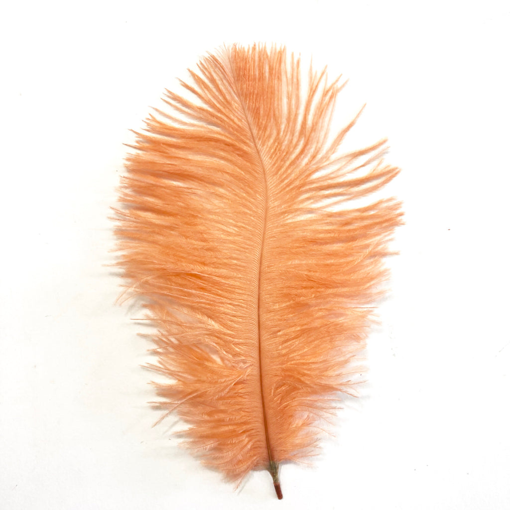 Ostrich Feather Drab 6-15cm x 20 - Apricot