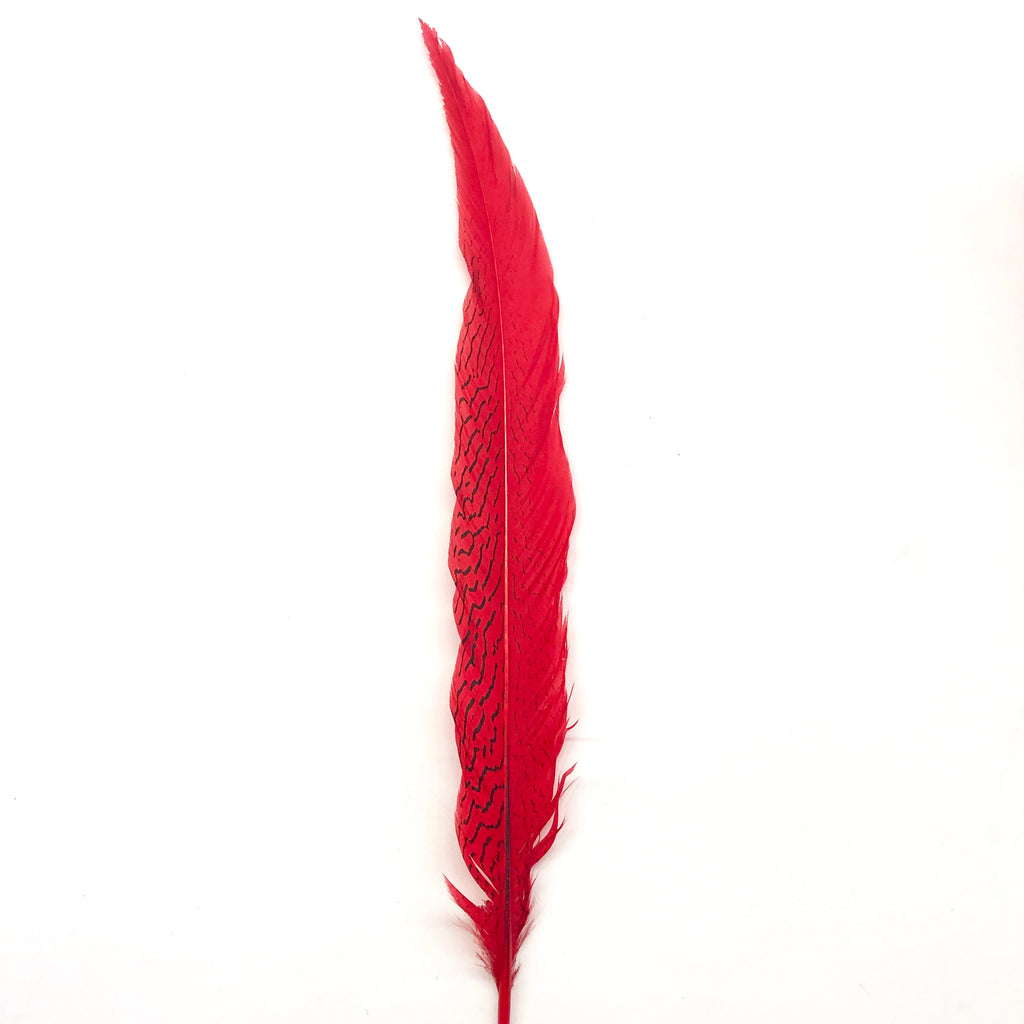 "10"" To 20"" Silver Pheasant Tail Feather - Red ((SECONDS))"