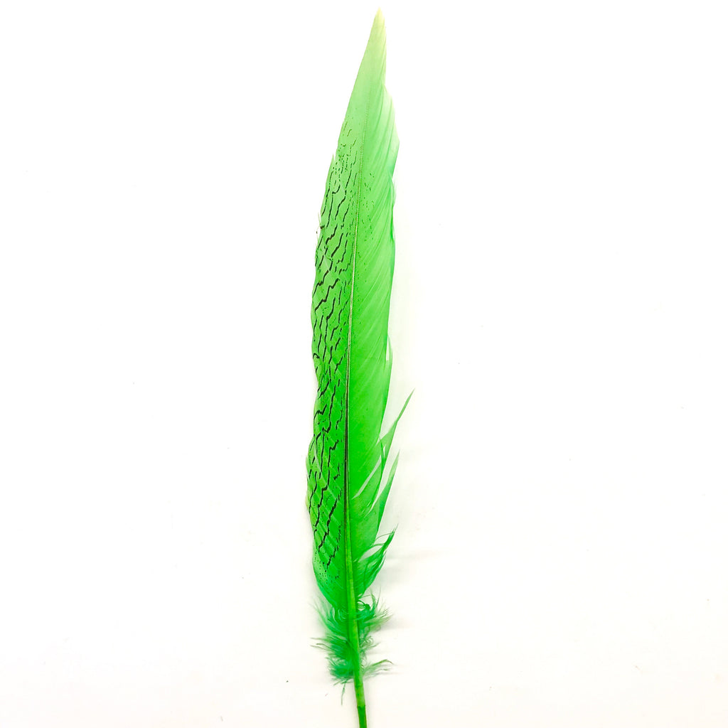 "6"" to 10"" Silver Pheasant Tail Feather - Lime Green"