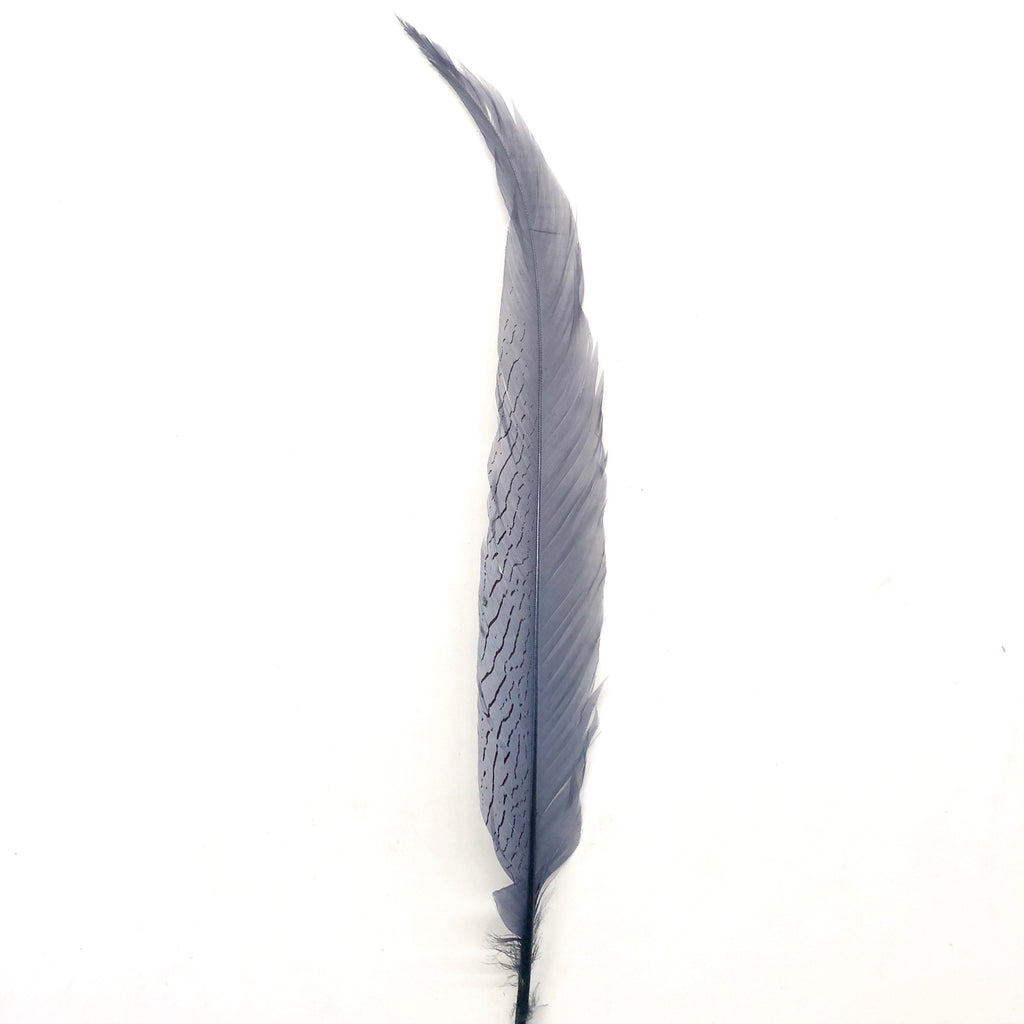 "6"" to 10"" Silver Pheasant Tail Feather - Grey"