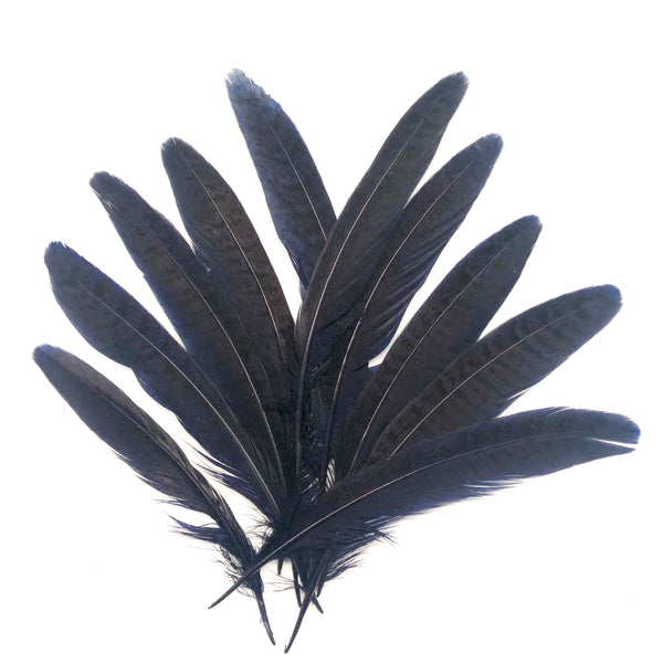 "Under 6"" Golden Pheasant Side Tail Feather x 10 pcs - Navy Blue"