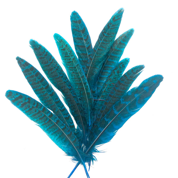 "Under 6"" Golden Pheasant Side Tail Feather x 10 pcs - Turquoise"