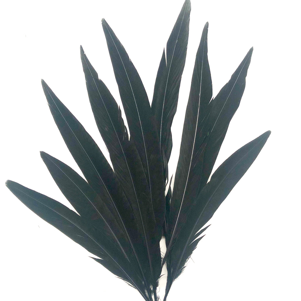 "6"" to 10"" Golden Pheasant Side Tail Feather x 10 pcs - Black"