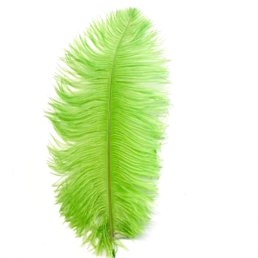 Ostrich Drab Feather 27-32cm - Lime Green *Seconds* Pack of 5