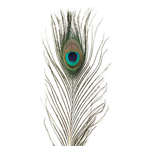 Natural Mini Peacock Eye Tail Feather x 10