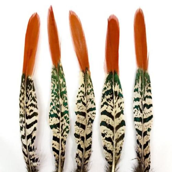 "8"" to 10"" Orange Tipped Lady Amherst - Natural"