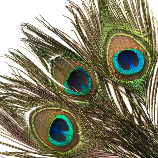 Natural Peacock Eye Tail Feather SHORT 25cm - 30cm x 10 pcs