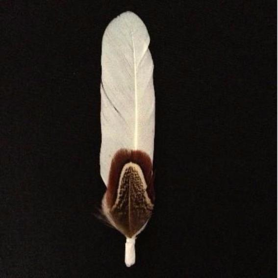 Dainty Feather Mount Style 58