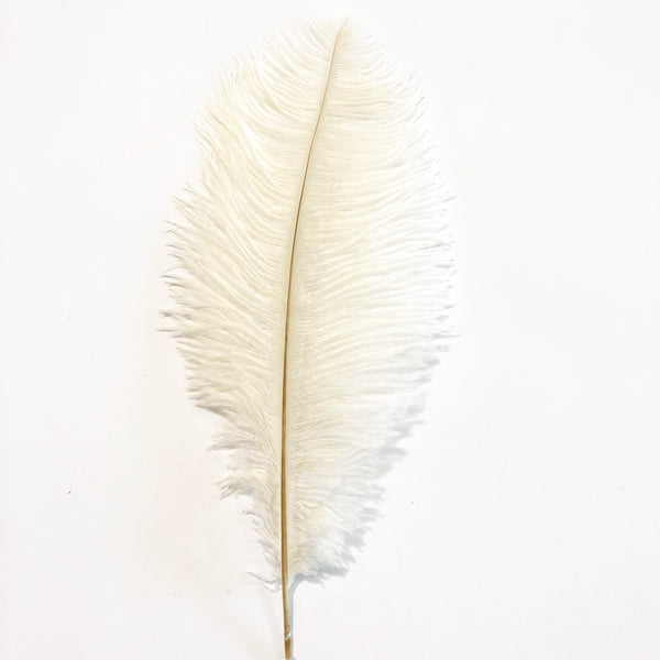 Ostrich Drab Feather 27-32cm - Off White *Seconds* Pack of 5