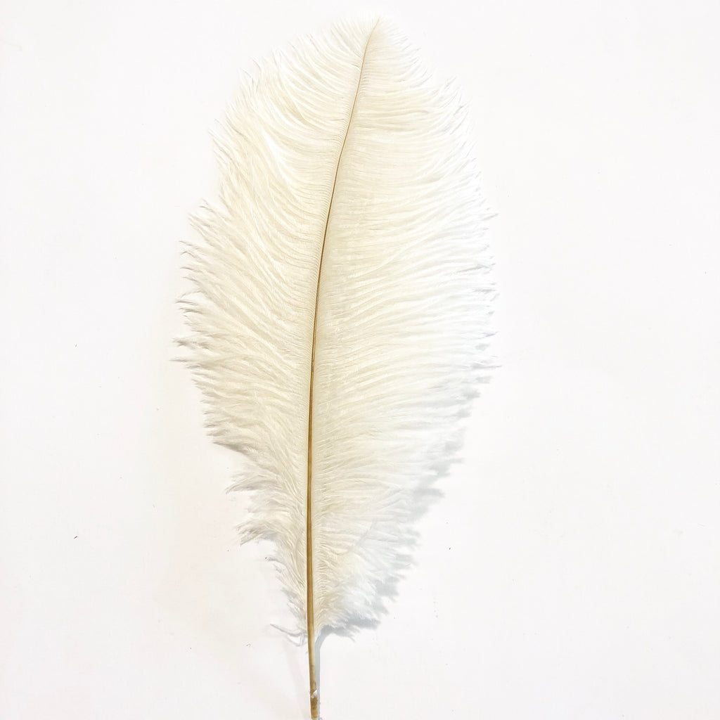 Ostrich Drab Feather 27-32cm - Off White