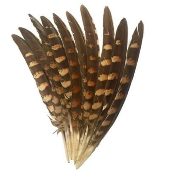 Natural Amherst Pheasant Wing Feathers x 10 pcs