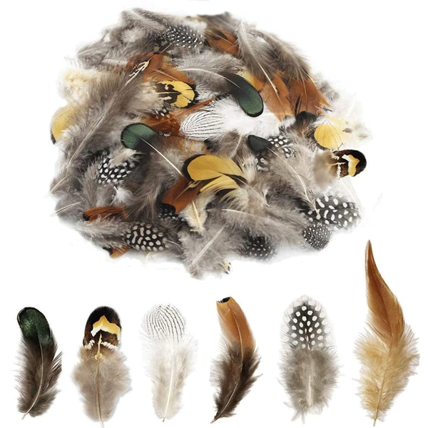 Natural Pheasant Guinea Rooster Peacock Feather Plumage Mix x 24pcs