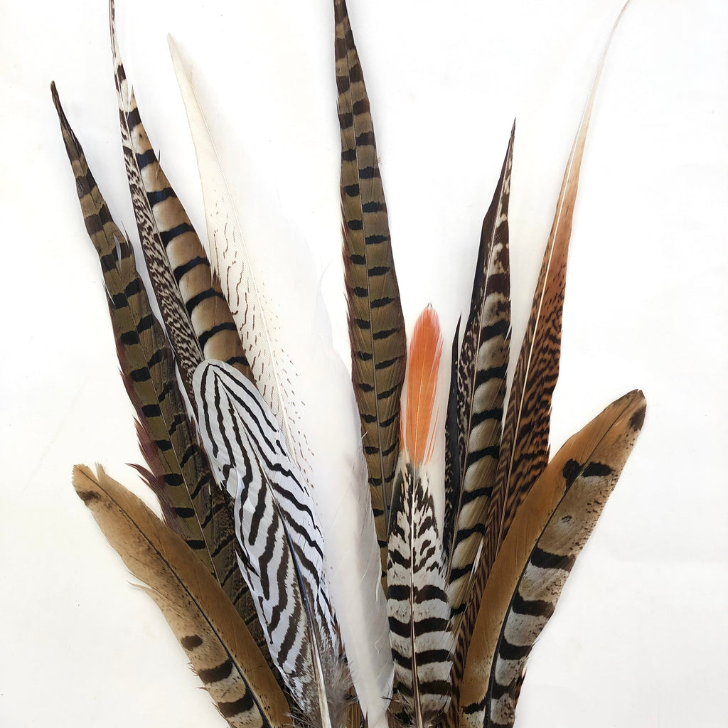 PHEASANT Natural Feathers 15-50cm Mixed Pack x 10