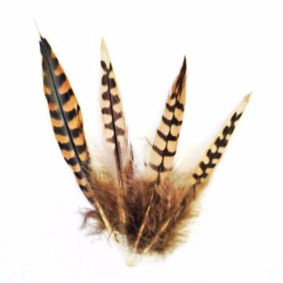 Natural Pointed Wild Coque Tail Feather - 1 gram