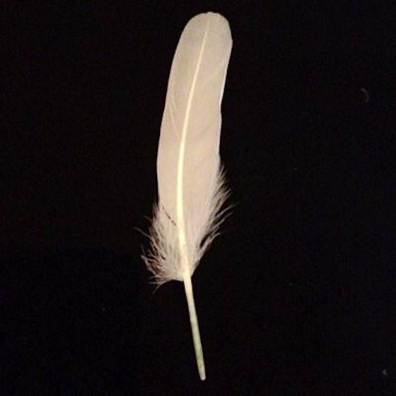 Goose Pointer Feathers 10 grams - Ivory