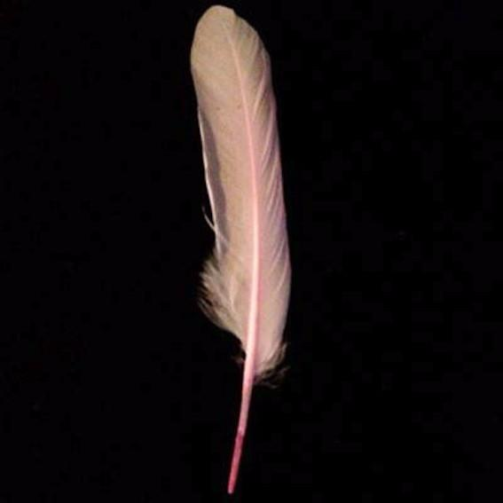 Goose Pointer Feathers 10 grams - Pink