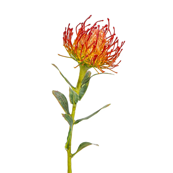 Artificial Australian Native Silk Protea Leucospermum  Flower Stem - Orange/Red (Style 5)