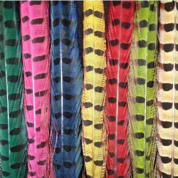 "Ringneck Tail Feathers 10"" to 20"" Assorted Colours x 10 pcs"