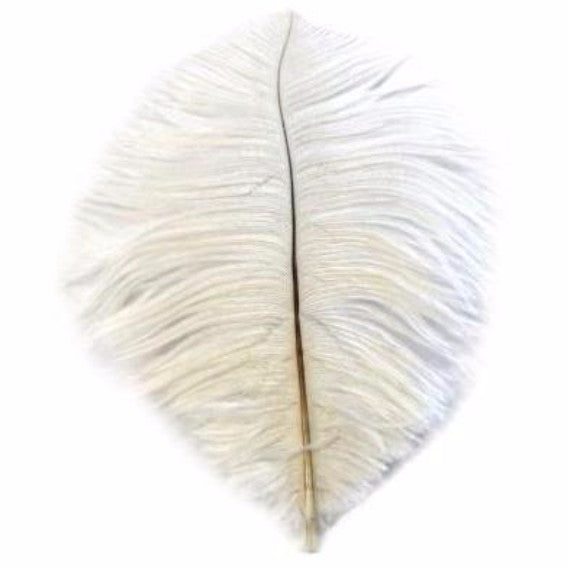 Ostrich Feather Drab 6-15cm x 5 - Off White ((SECONDS))