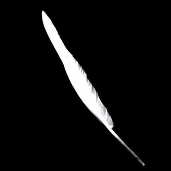 Goose Flight Wing Feather x 5 pcs - White