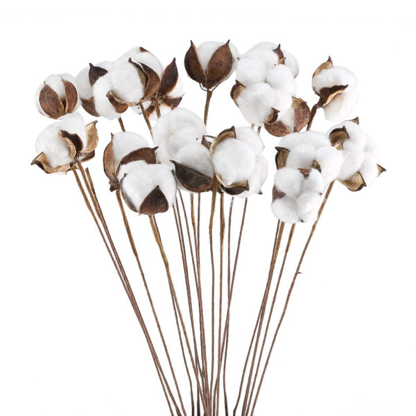 Artificial Natural Dried Cotton Flower Stem - White