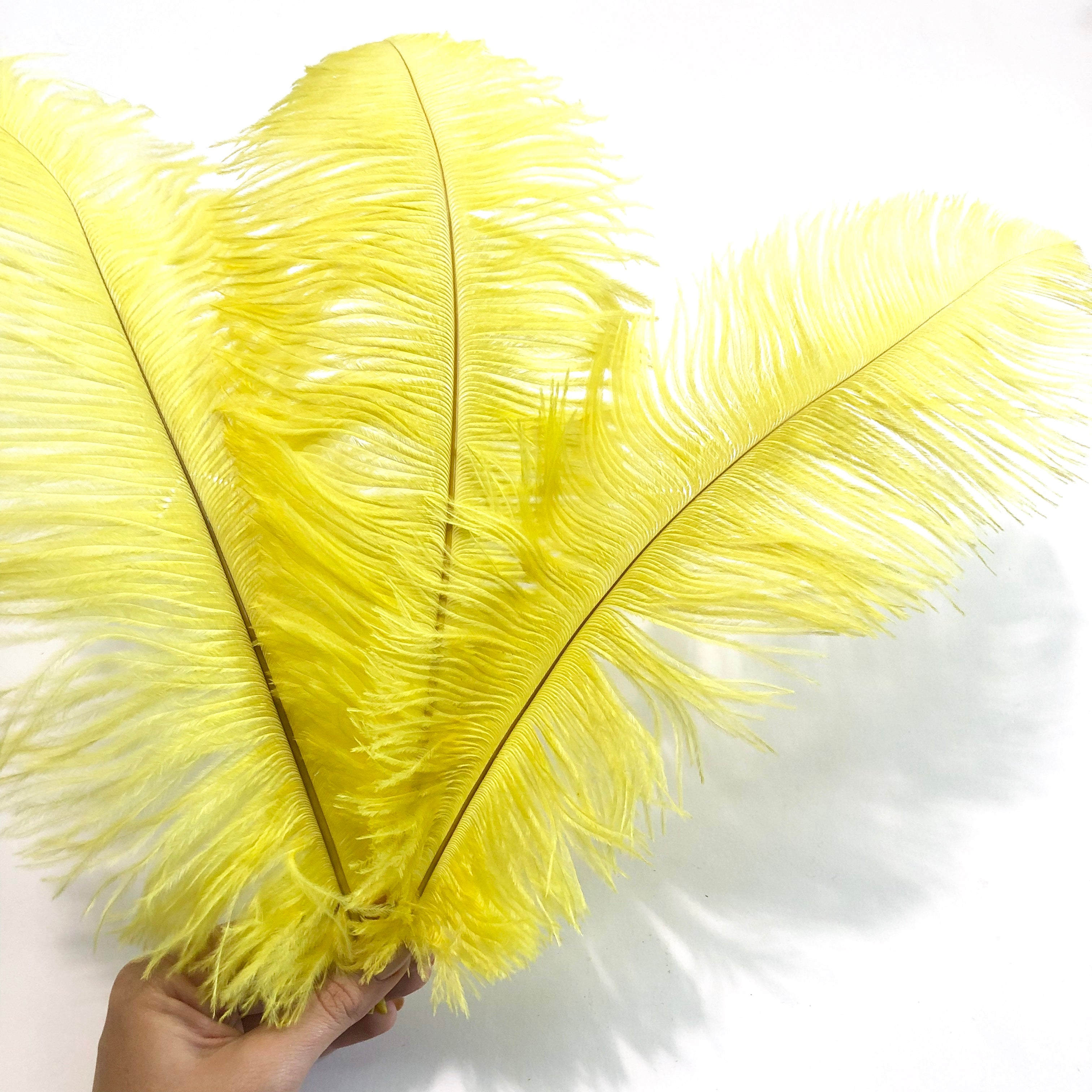Wholesale Feathers /& Craft Supplies New Black Drab 37-42cm