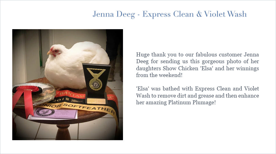 Huge thank you to our fabulous customer Jenna Deeg for sending us this gorgeous photo of her daughters Show Chicken 'Elsa' and her winnings from the weekend!  'Elsa' was bathed wit0h Platinum Pony's Express Clean and Violet Wash to remove dirt and grease and then enhance her amazing Platinum Plumage!