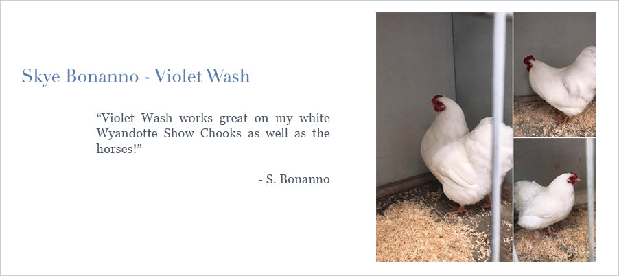 Platinum Pony Violet Wash works great on my white Wyandotte Show Chooks as well as the horses!