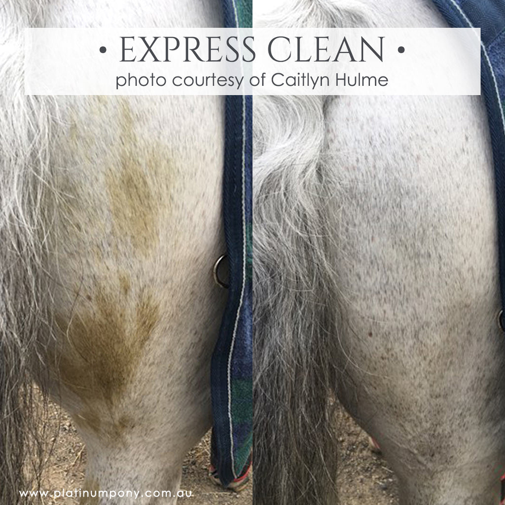 Express Clean - 1Lt plus Bonus
