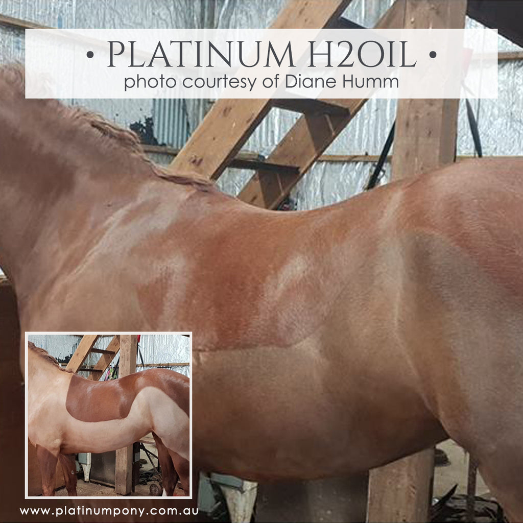 Platinum H2Oil - 1Lt plus bonus